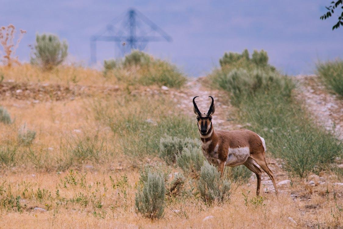 Brown Deer on Ground