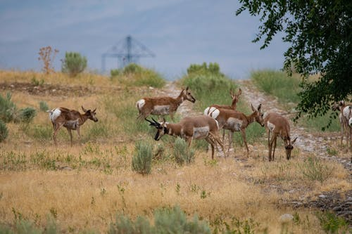 Δωρεάν στοκ φωτογραφιών με impala, αγέλη, άγρια ζώα, άγρια φύση