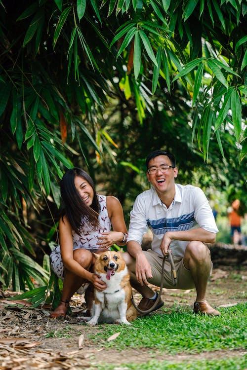 개, 공원, 남자, 미소의 무료 스톡 사진