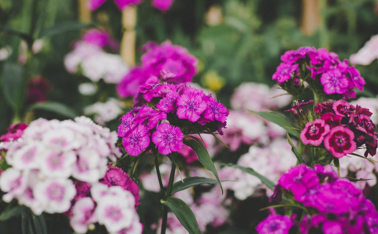 botanický, farba, flóra