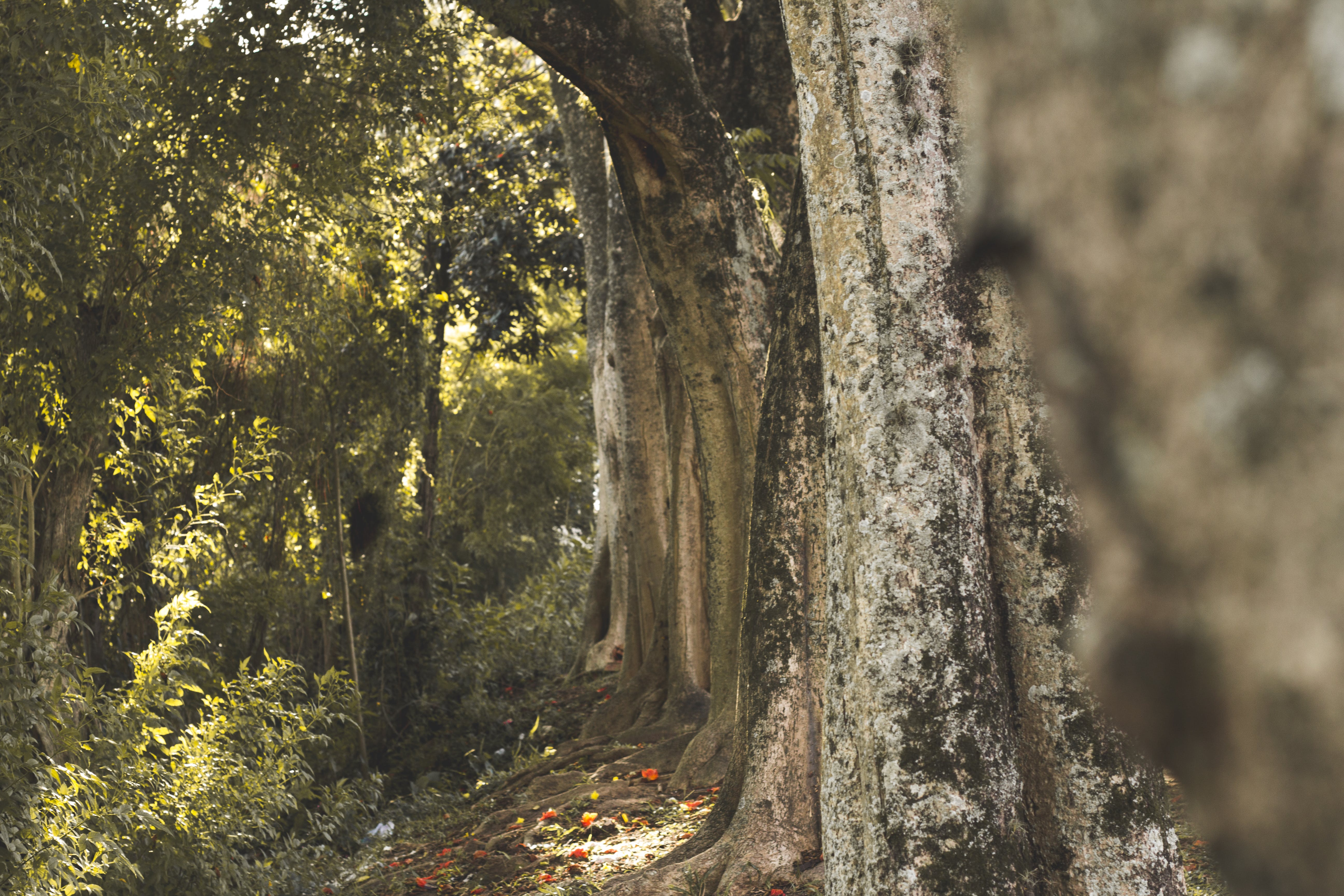 Free stock photo of nature, trunk, tree, tree trunk