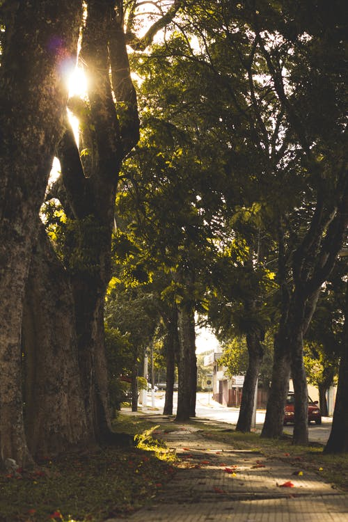 luonto, puu, puunrunko