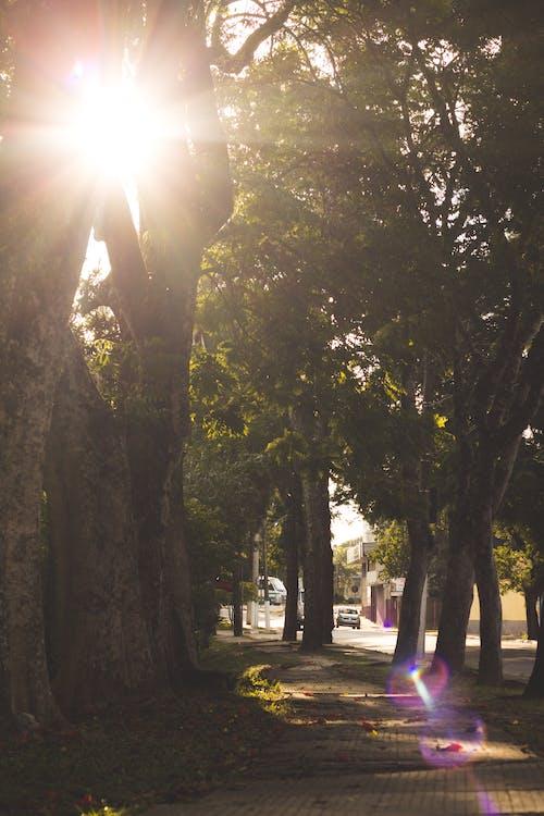 ağaç, ağaç gövdesi, doğa içeren Ücretsiz stok fotoğraf