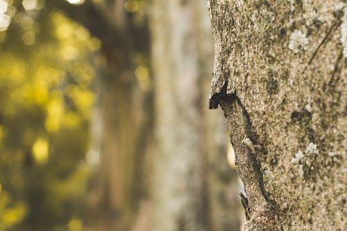 Kostnadsfri bild av bark, grov, närbild, textur