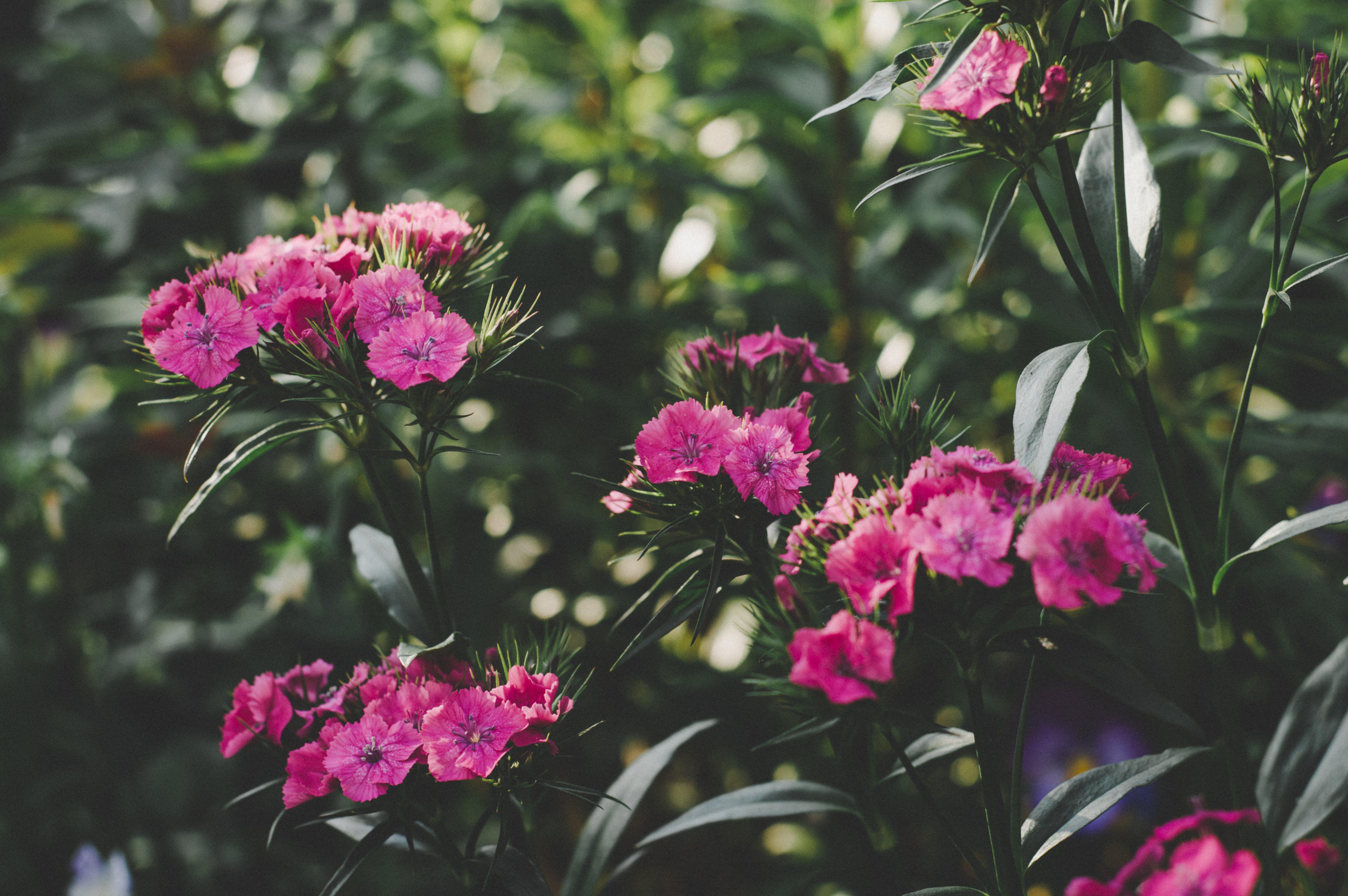 blomma, blommor, blomning