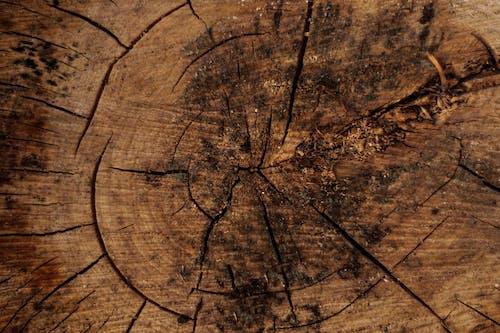 Foto d'estoc gratuïta de de fusta, fer la planxa, fusta, marró