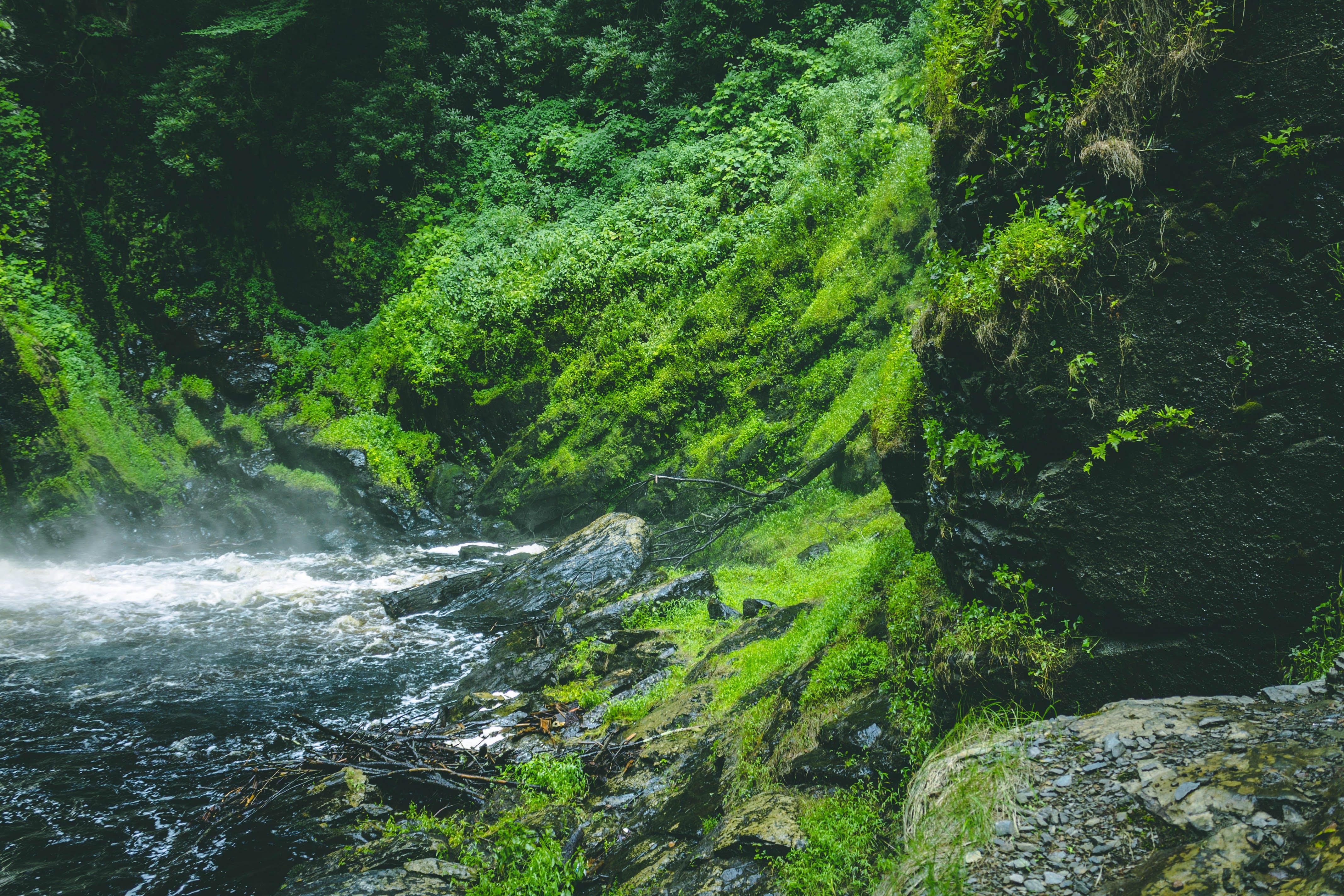 Kostenloses Stock Foto zu bäume, berg, draußen, fels