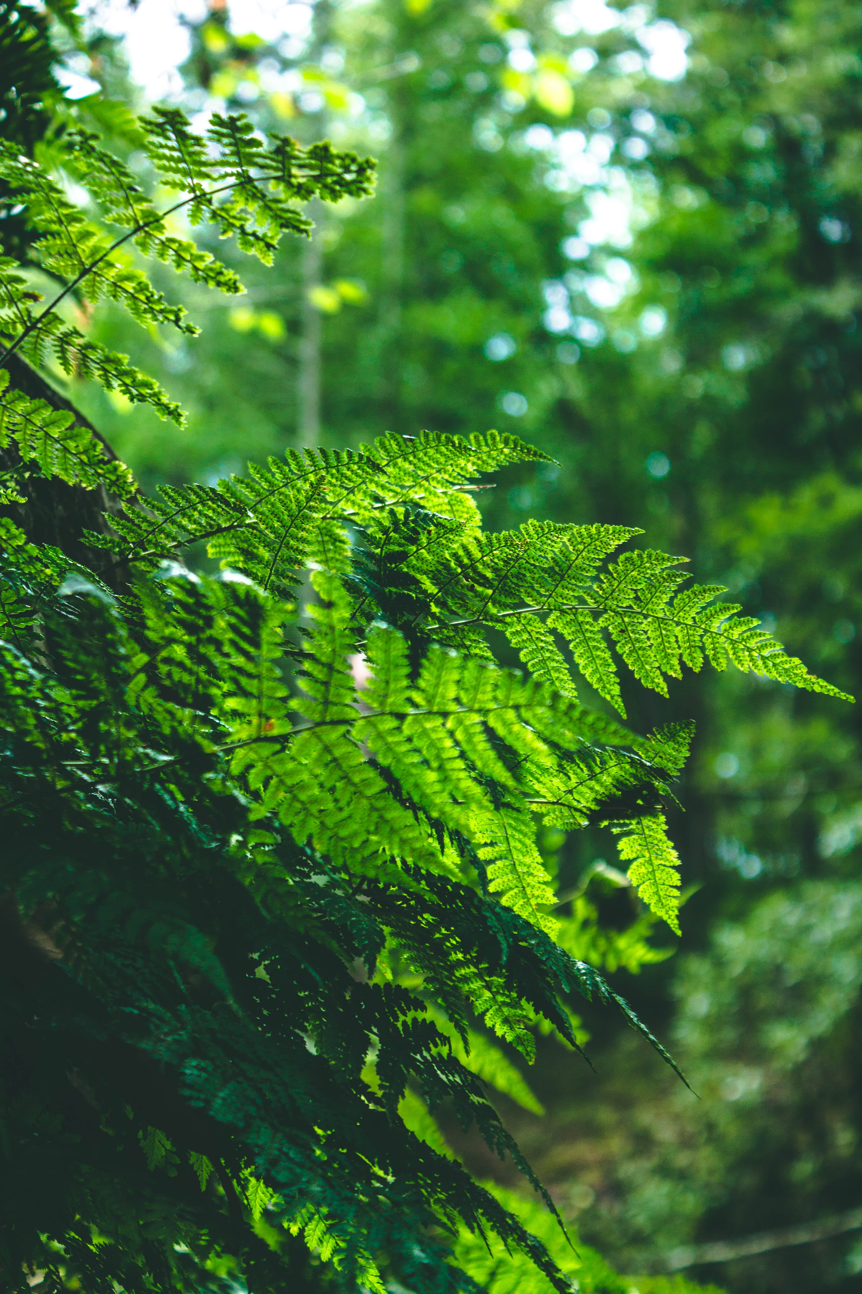 Shallow Focus Photography of Green Ferns