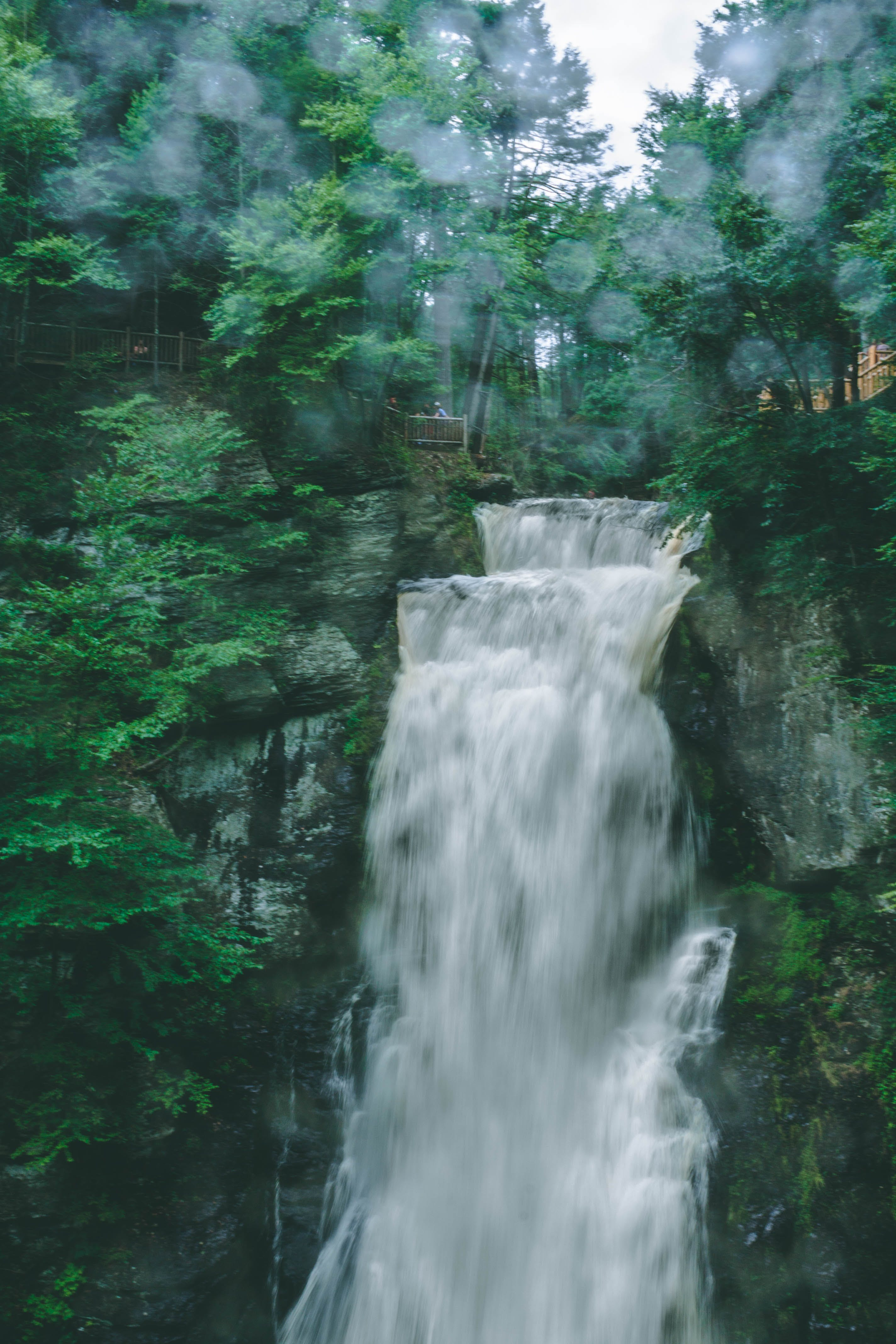 Free stock photo of #forest, nature, waterfall
