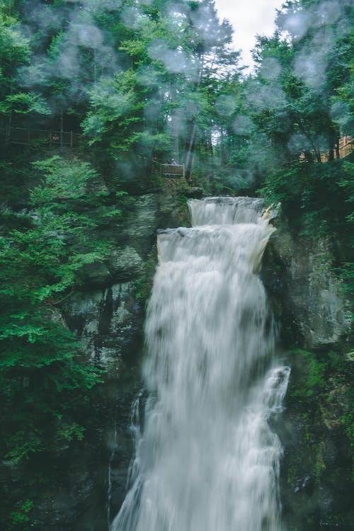 Kostenloses Stock Foto zu #wald, natur, wasserfall