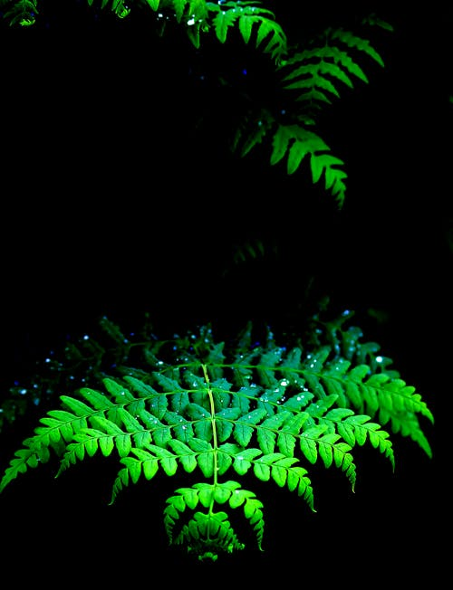 綠色蕨類植物, 蕨葉, 露珠 的 免费素材照片