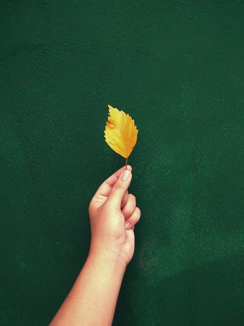 Foto profissional grátis de amarelo, contradição, descomplicado, ecológico