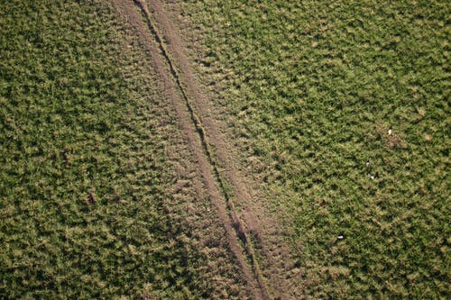 Fotos de stock gratuitas de camino, hierba seca, pasto seco