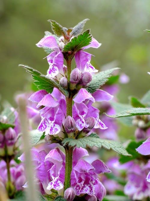 紫色, 紫色的花朵 的 免费素材照片