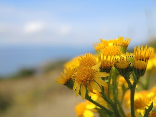 夏天, 天性, 明亮, 晴天 的 免费素材照片