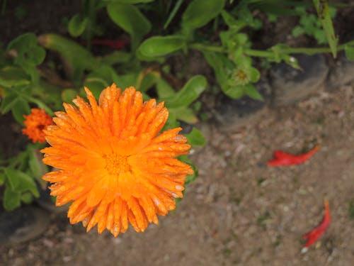 橙子, 豐富多彩 的 免费素材照片
