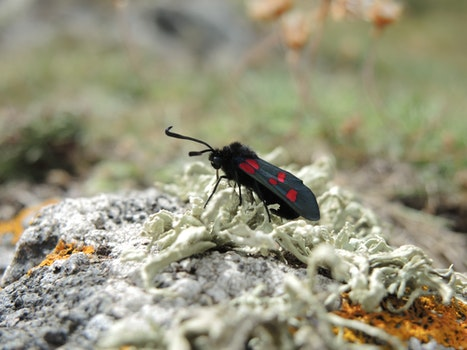 Black and Red Winged Insect Tilt Shift Lens Photography