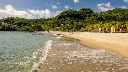 Foto profissional grátis de água, areia, árvores, beira-mar