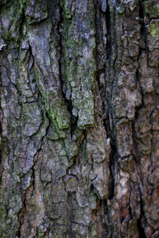 Kostenloses Stock Foto zu bäume, baumstamm, borke, holz
