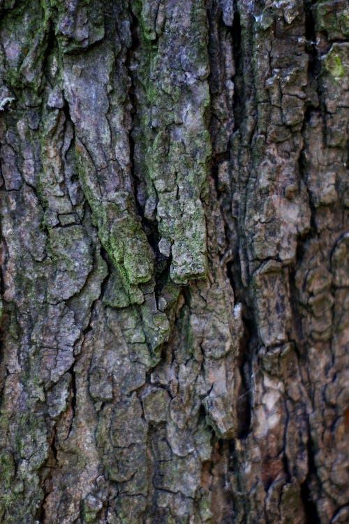 Foto d'estoc gratuïta de arbres, bagul, bosc, escorça