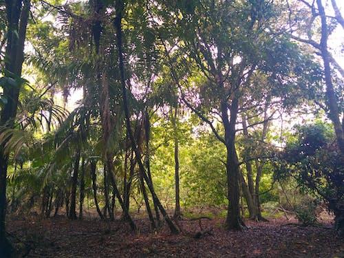 Photos gratuites de arbres, forêt, nature, vert