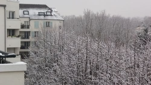Free stock photo of neige, snow