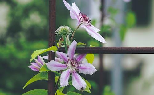 Бесплатное стоковое фото с ботанический, дневное время, заводы, лепестки