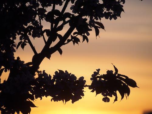 Foto stok gratis #bayangan hitam, #bunga-bunga, #matahari terbenam, #musim panas