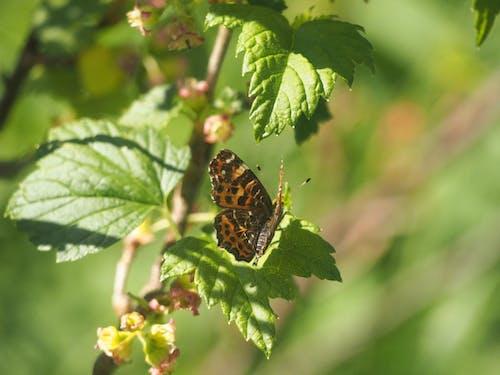 Foto stok gratis #alam, #buram, #butterfly, #hijau