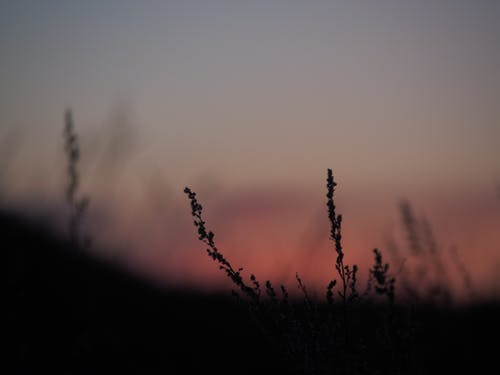 Plants with thin stems on meadow at sunset