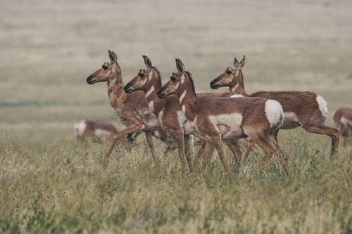 一群動物, 動物, 哺乳動物, 天性 的 免费素材照片