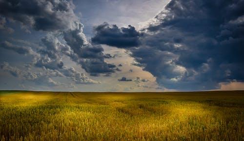 Základová fotografie zdarma na téma farma, hřiště, krajina, obloha