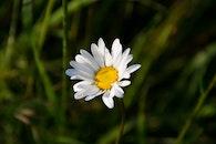 nature, field, summer