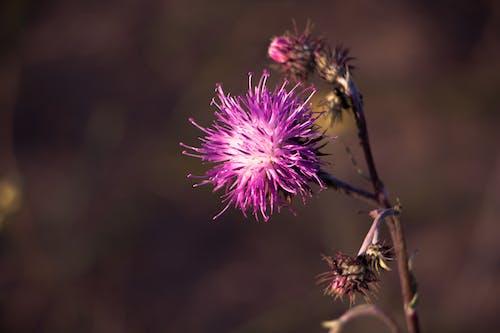 가벼운, 꽃이 피는, 다채로운, 보라색의 무료 스톡 사진