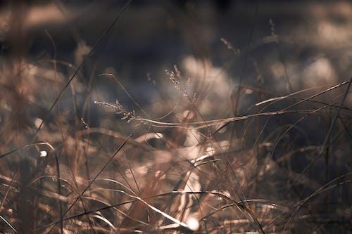 ドライ, 屋外, 工場, 草の無料の写真素材
