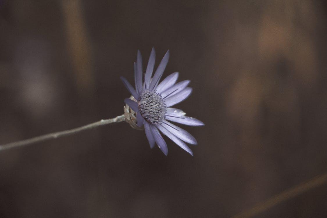 Macro Lens Photo Showing Purple Flower