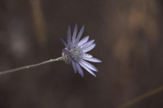 Kostenloses Stock Foto zu natur, blütenblätter, pflanze, blume