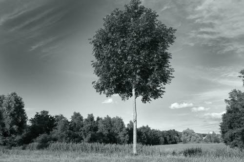 Free stock photo of Dutch landscape, field, landscape, lonely tree