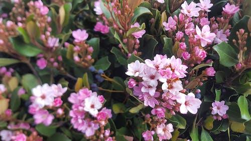 Darmowe zdjęcie z galerii z canon, kwiat, kwiaty, la jolla