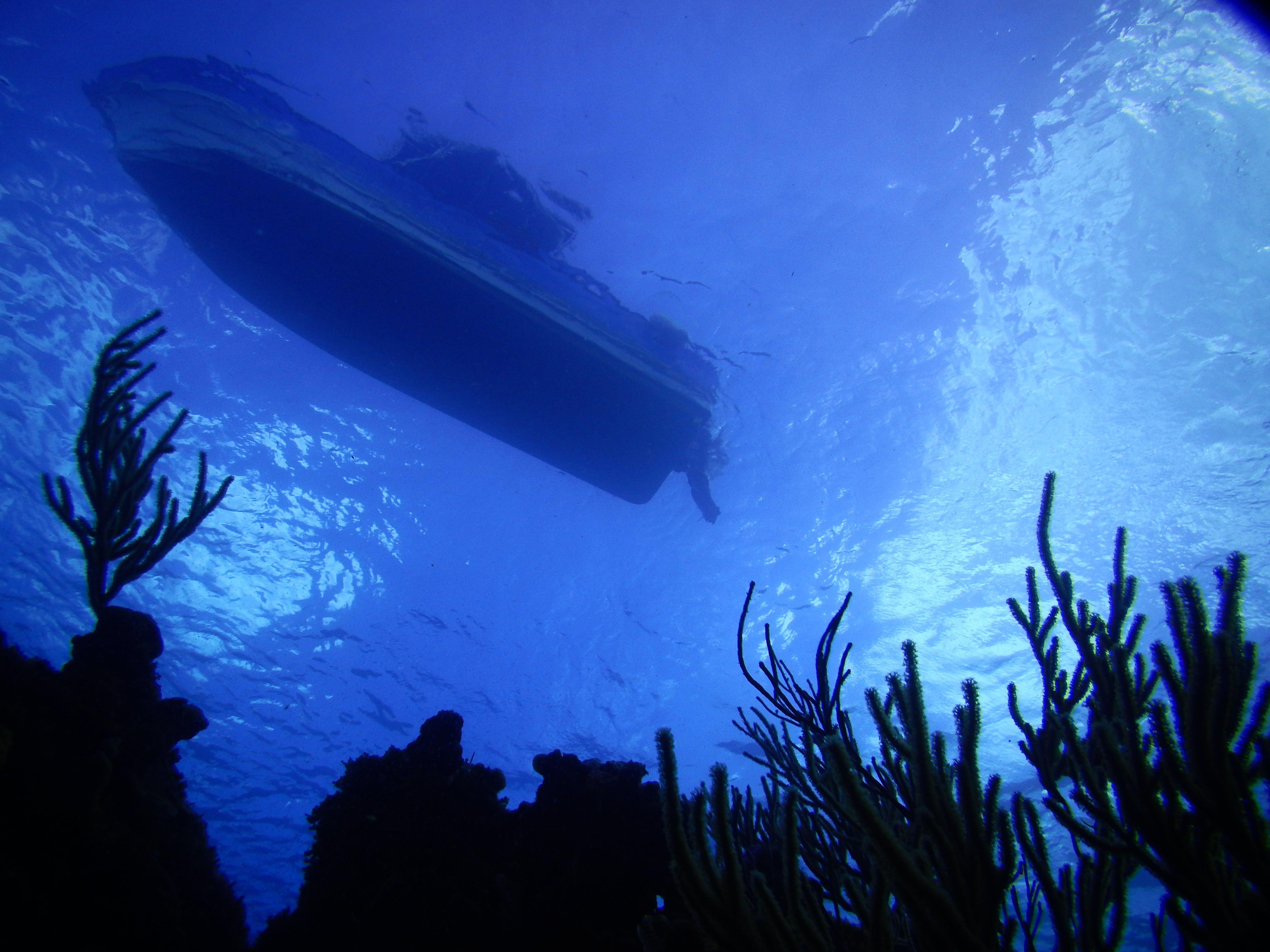 Free stock photo of caribbean beach, scuba diving