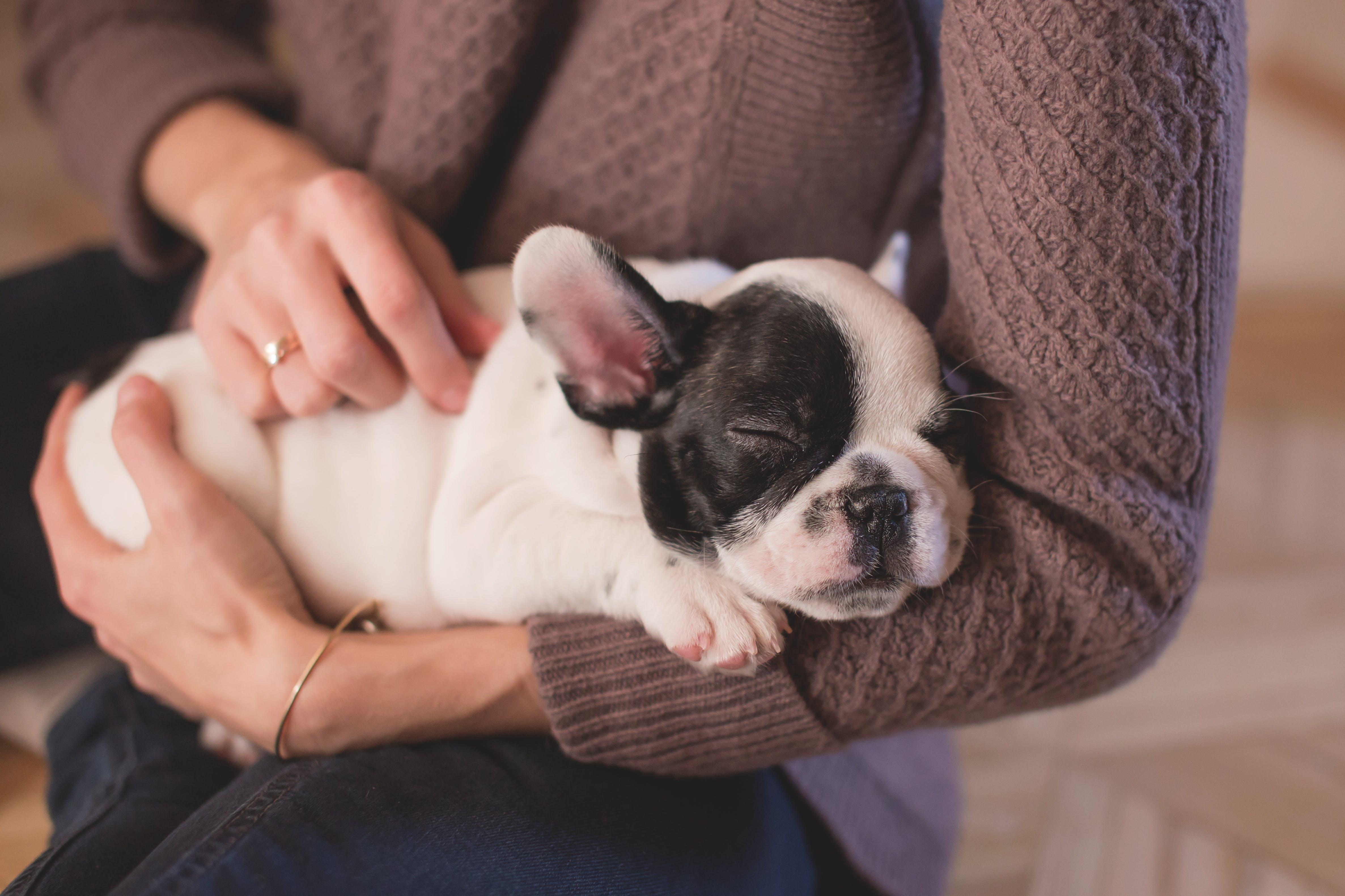 Kostenloses Stock Foto zu bulldogge, hände, haustier, hund