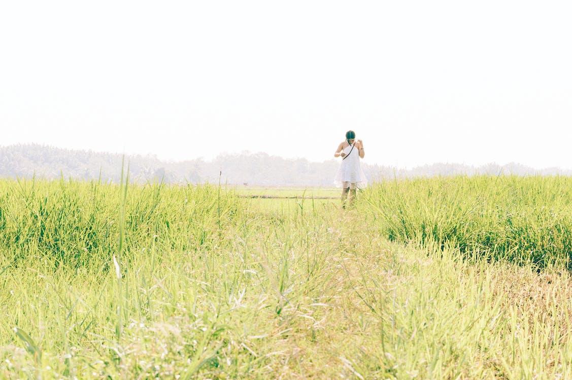 ban ngày, cánh đồng, cánh đồng lúa mì