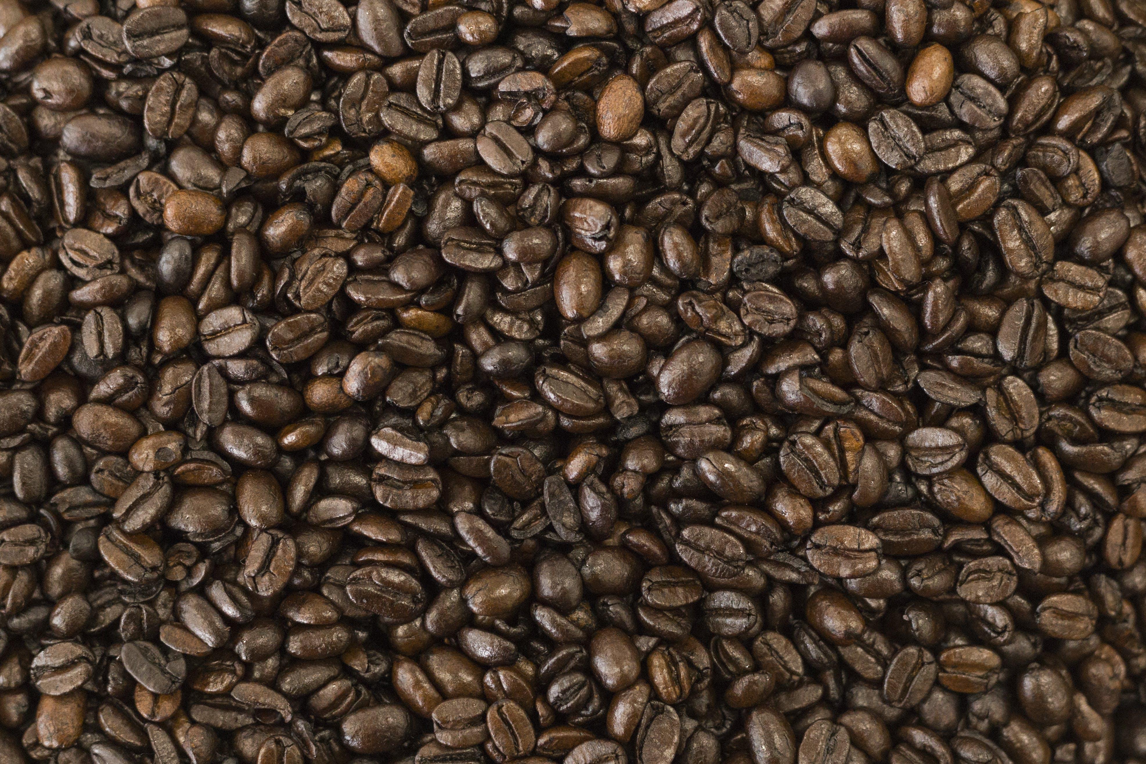 Free stock photo of coffee, coffee bean