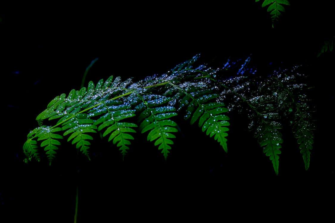 abstrakcyjny, drzewo iglaste, jasny