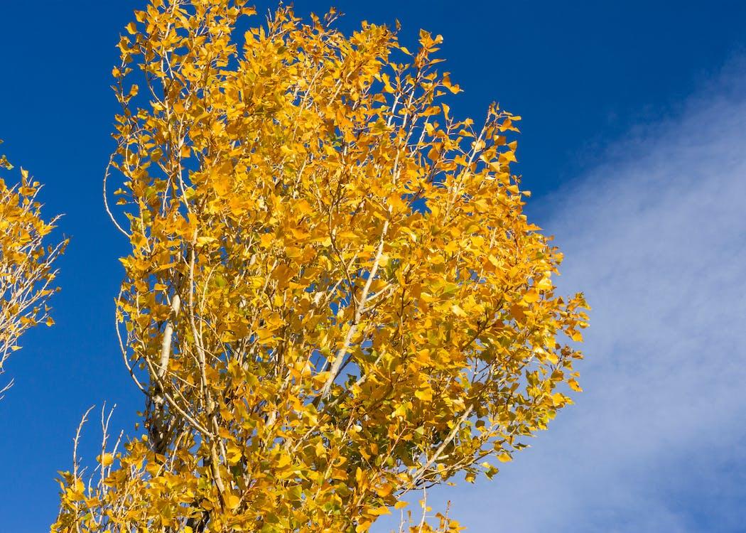 γαλάζιος ουρανός, δέντρα, κίτρινη