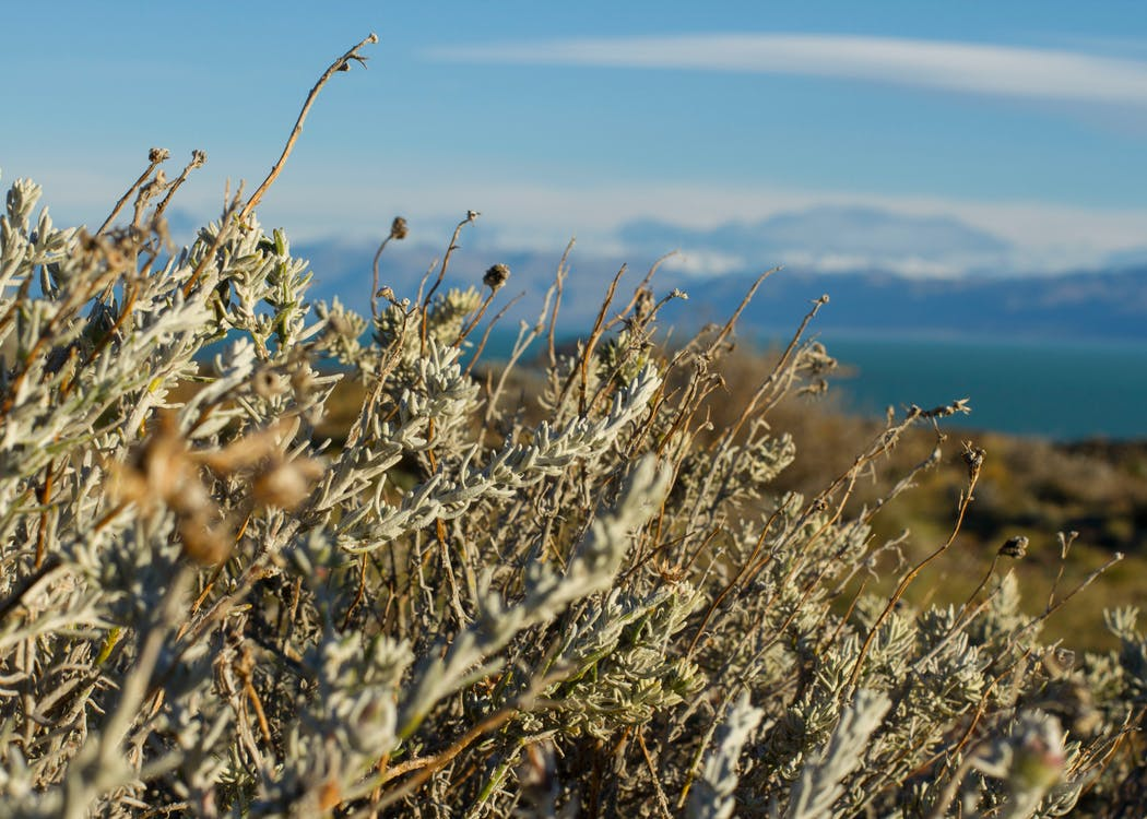 Fotobanka sbezplatnými fotkami na tému fotografia prírody, krásny, nádherný