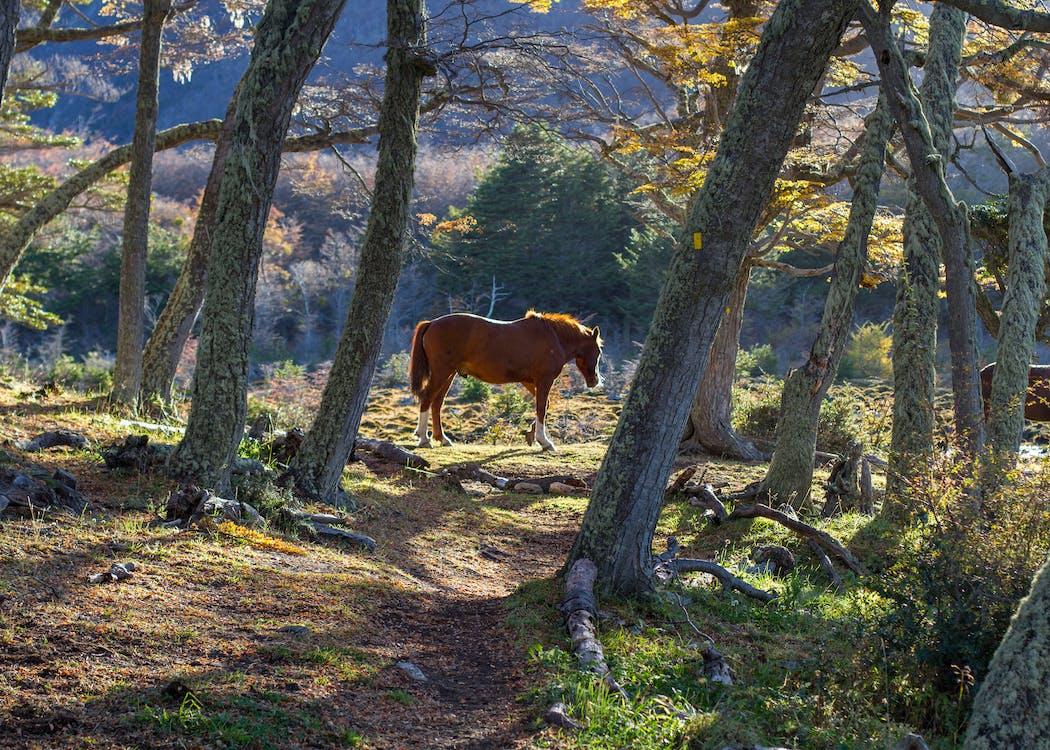 Foto stok gratis alam, bagus, binatang