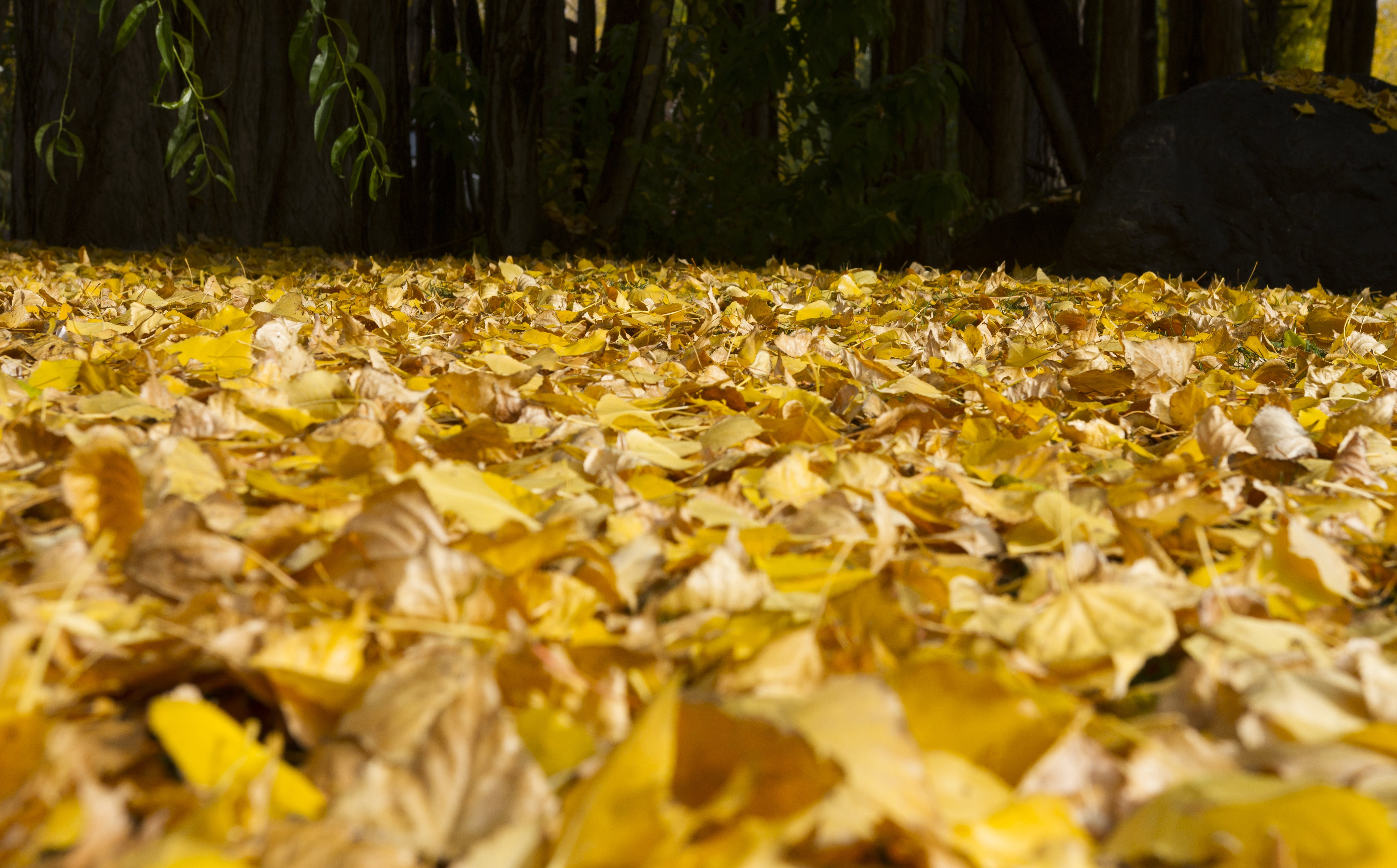 Free stock photo of nature, leaves, ground, floor