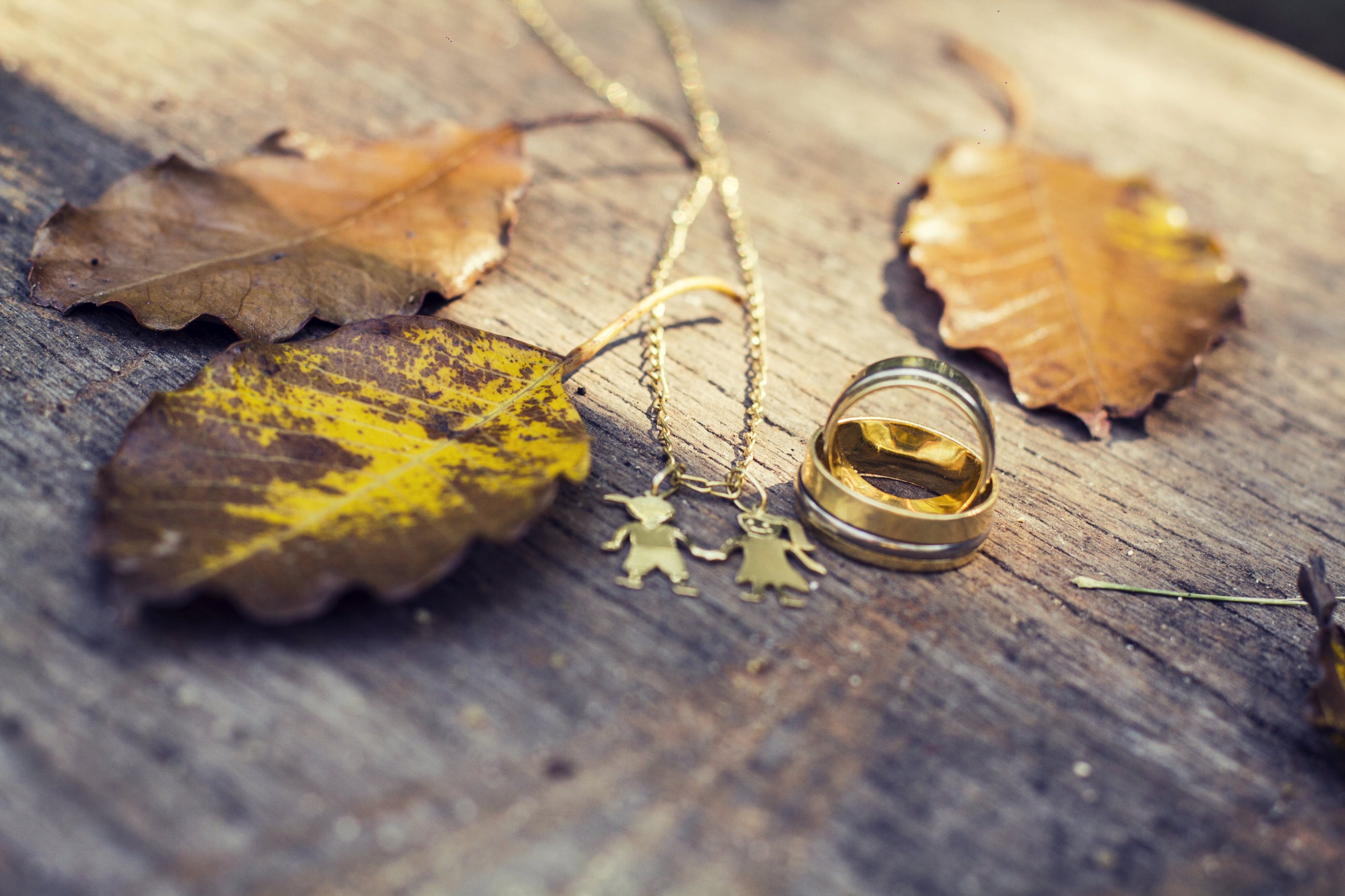 Free stock photo of children, family, leaves, marriage