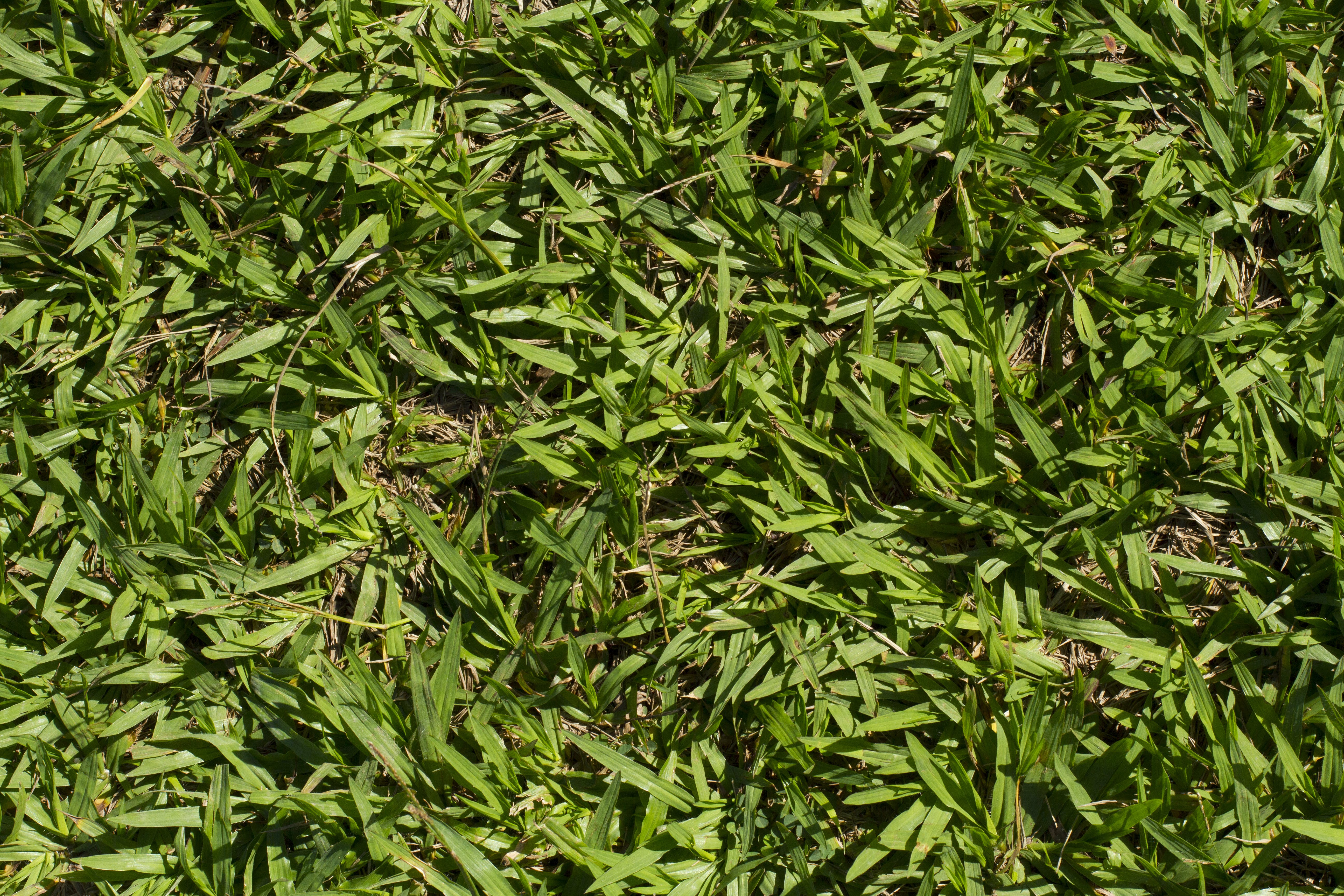Free stock photo of grass, green, leaves, nature